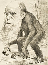Body of an ape with Charles Darwin's head attached